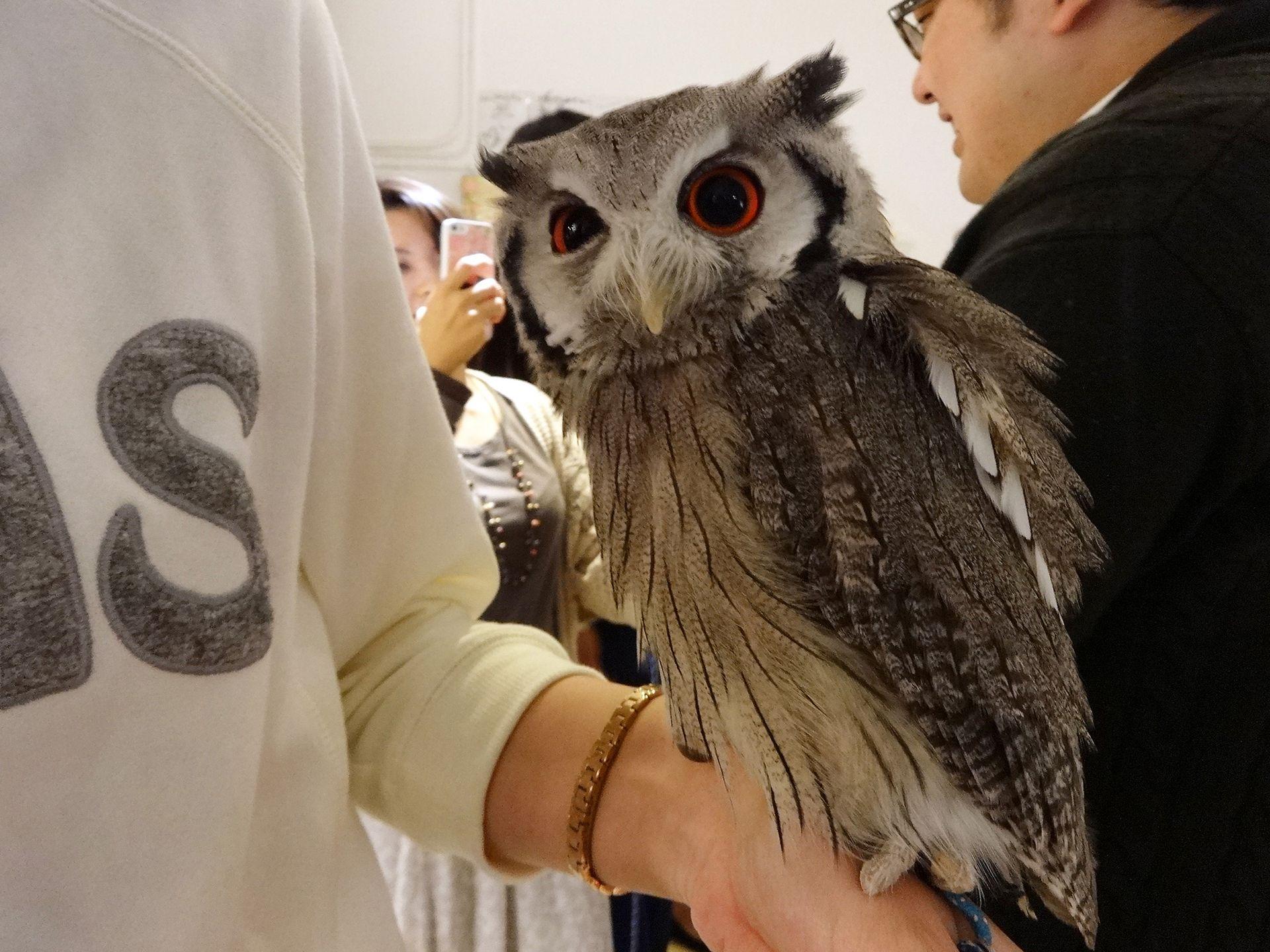 动物主题咖啡店 动物与顾客亲密互动萌萌哒