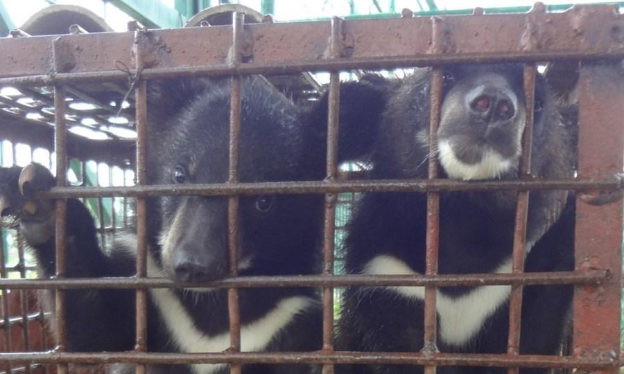 犀牛角村_老挝度假村为吸引中国游客出售老虎肉[6]- 中国日报网