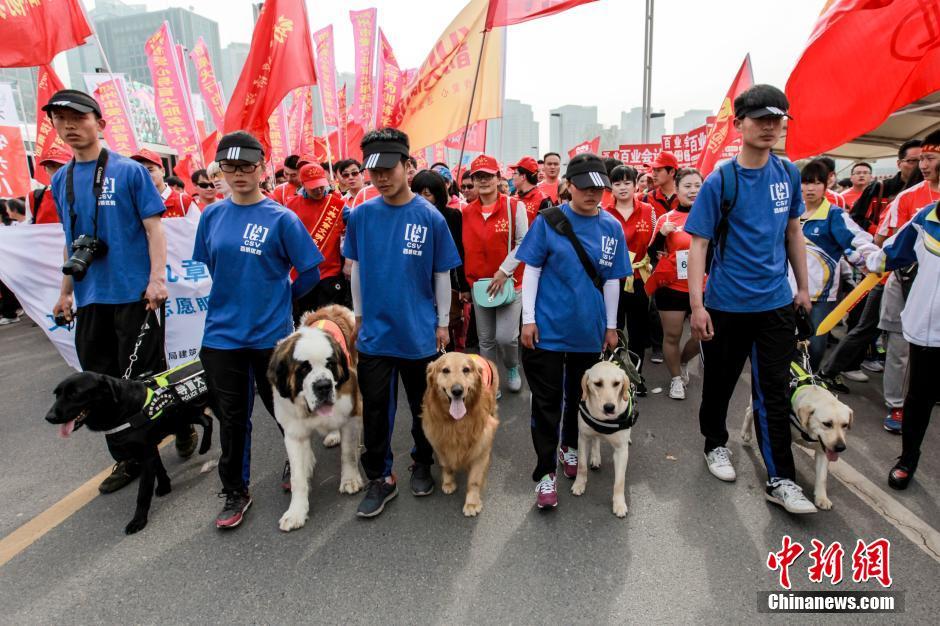 """郑州国际马拉松 导盲犬为盲人选手""""领航"""""""