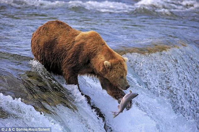 尖熊手绘教程