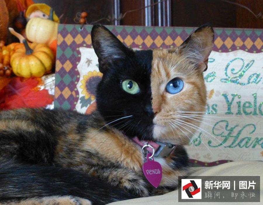 壁纸 动物 猫 猫咪 小猫 桌面 900_700