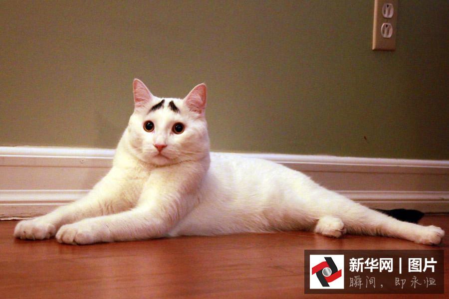 走红猫生气萌宠界的网红盘点锤锤子那的猫搞笑图片图片