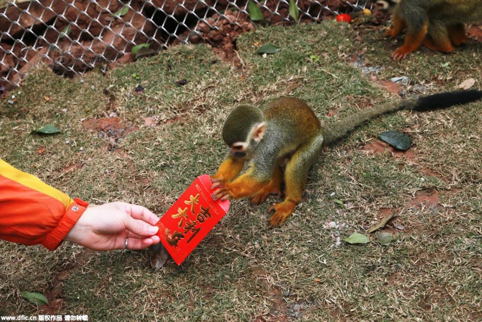 动物世界里,就出现了这么一件趣事