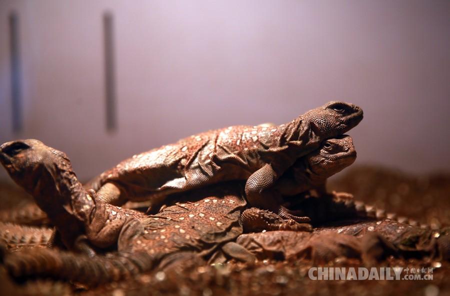 这是北京首次从苏丹进口此类野生动物.