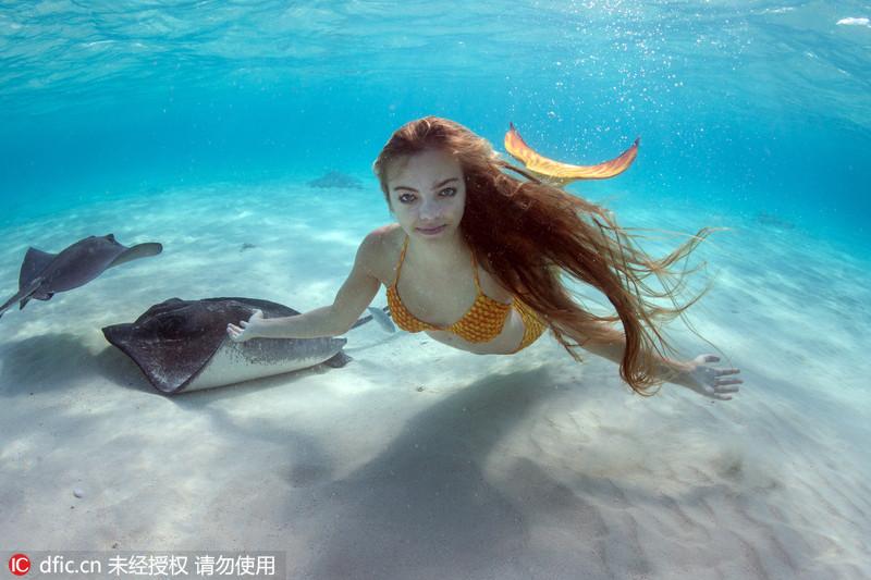 2016年6月16报道,来见识一下真实版的美人鱼!这组不可思议的照片显示一条真实的美人鱼正在清澈的海水中与致命黄貂鱼共舞,画面唯美。这条美人鱼名叫Margaux Maes,今年19岁,她给自己装了一个美人鱼的尾巴,在拉美的开曼群岛潜水。她的妈妈Ellen Cuylaerts是一名野生水下摄影师,为她拍下了这些照片。ELLENCUYLAERTS Underwater photog/东方IC