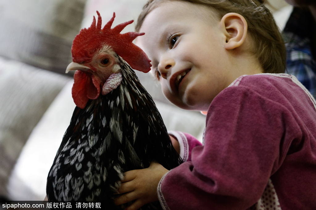 俄罗斯一动物园推出动物治疗打算