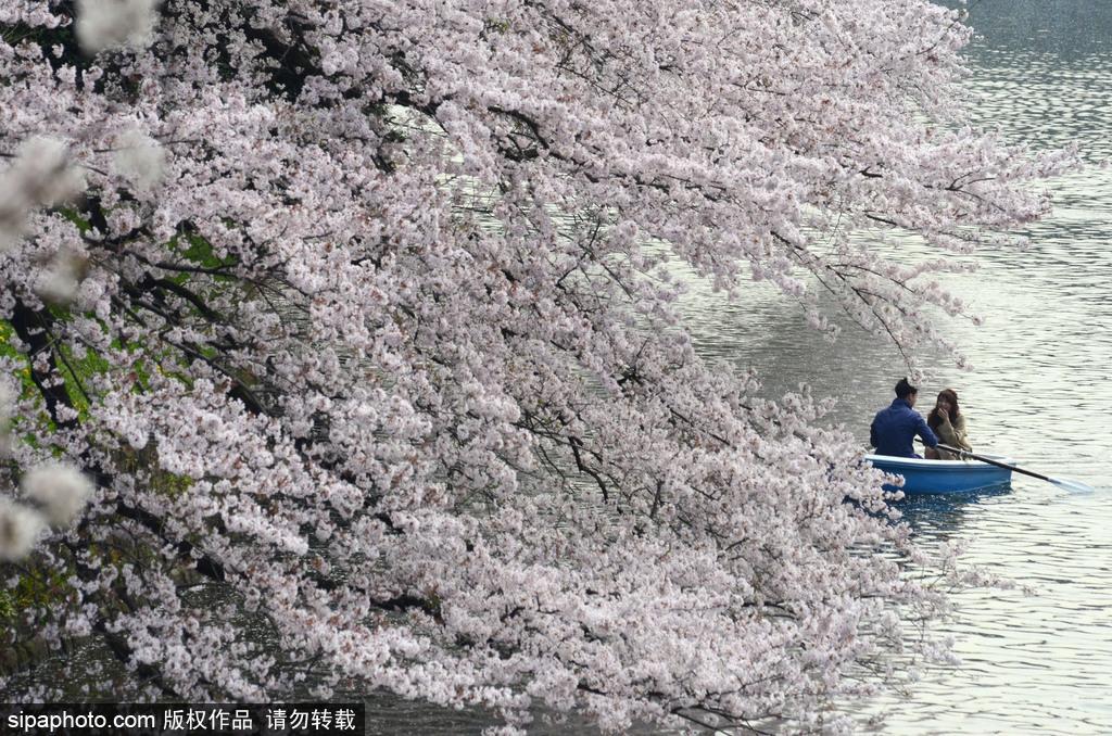 日本樱花季即将到来 盘点国内外赏樱胜地超浪