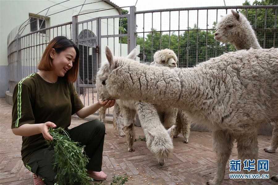 女儿王蕊小时候经常跟妈妈去上班,受妈妈影响,王蕊渐渐喜爱上了小动物
