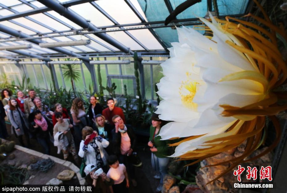 世间奇花在圣彼得堡盛开 一年只开一回 - zcyyglzx - zcyyglzx的博客